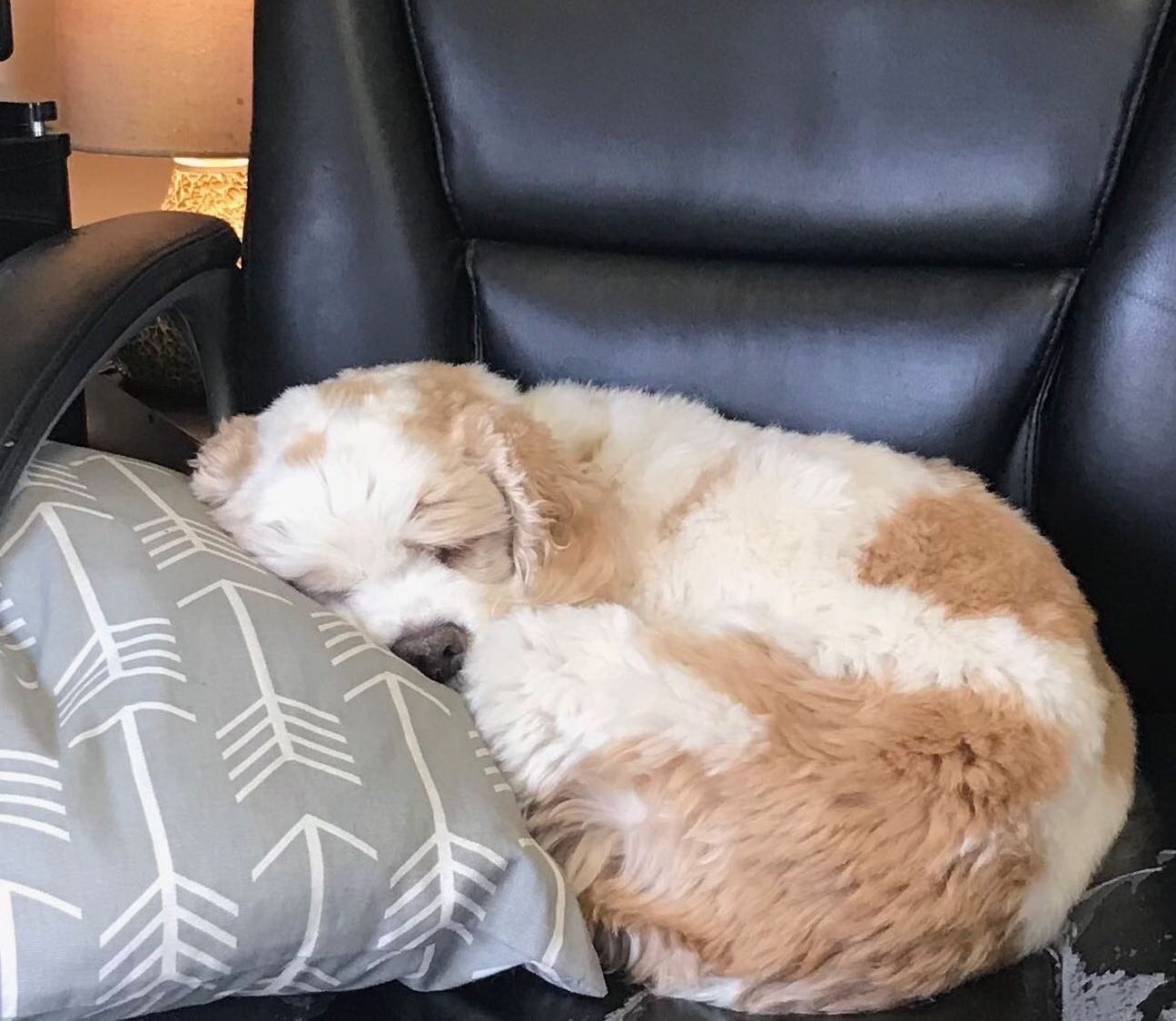 """Wendy's """"fourth child"""" CASSIE resting in an office chair here at parentsquare after a long day of hard work"""