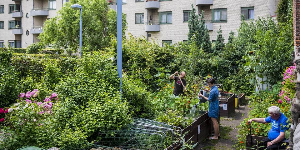 Zusters-der-Armenpark - Een nieuw ecologisch en eetbaar buurtpark van en voor Antwerpen-Noord