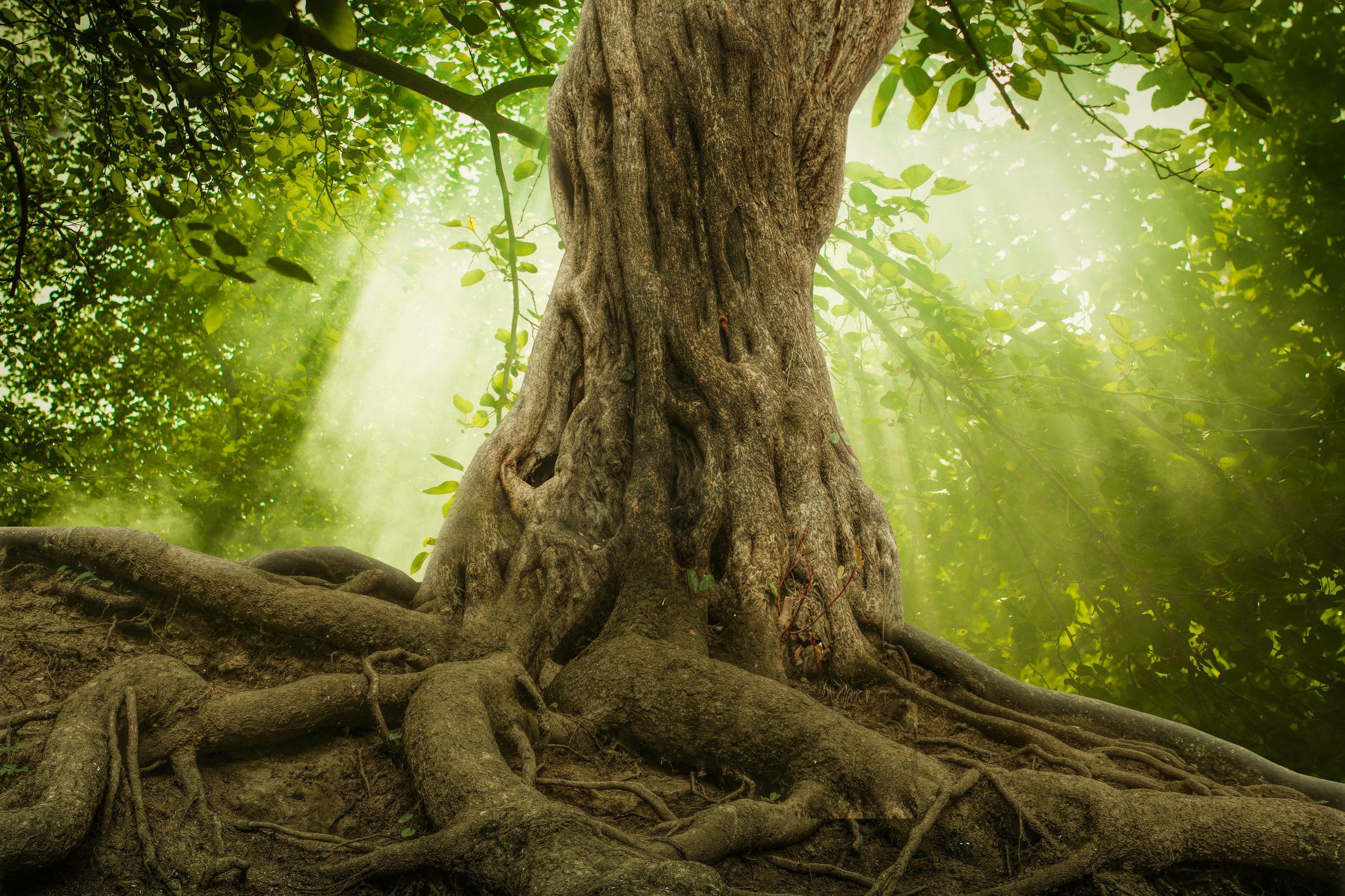 deep roots.jpg