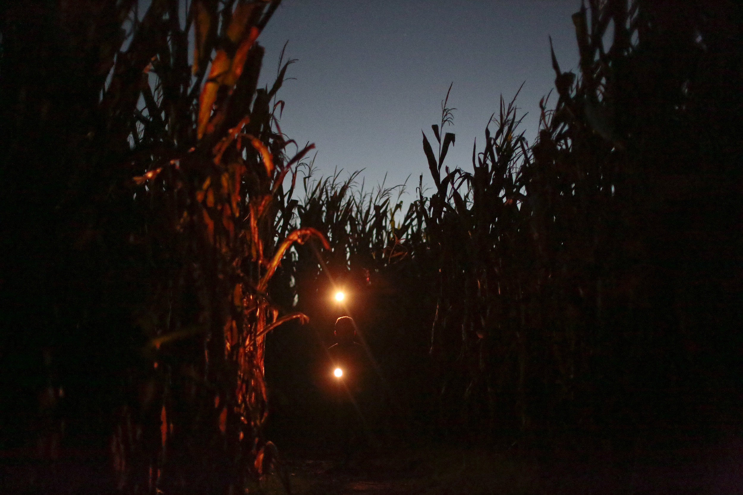 Patrons wander through the maize in the dark only led by a small map and the light of their flashlights at The Maize at Milton corn maize which is themed for the 2012 elections with a mock voting booth, election and the maze is shaped like the heads of President Barack Obama and Republican presidential candidate, Mitt Romney in Milton, Tenn. on Saturday October 20, 2012. Jackson Vaught and his brother Chandler Vaught started creating a corn maze 8 years ago to earn some extra money but now they are making more money from this than their family is from the rest of the farm.