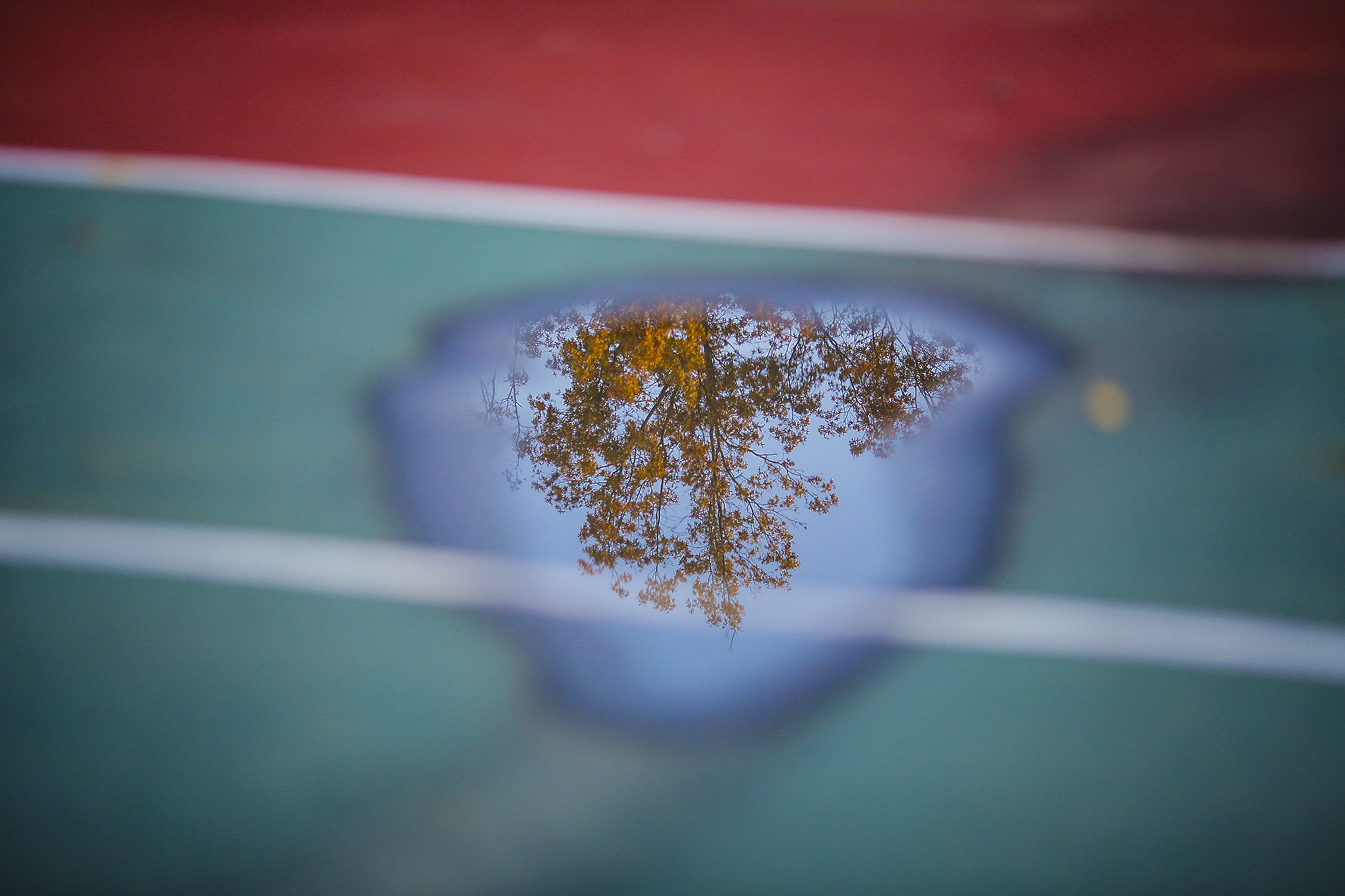 Fall colors show on a tree reflected in a puddle on a basketball court at Hannah Park in Gahanna, Ohio on Sunday, Nov. 03, 2013.