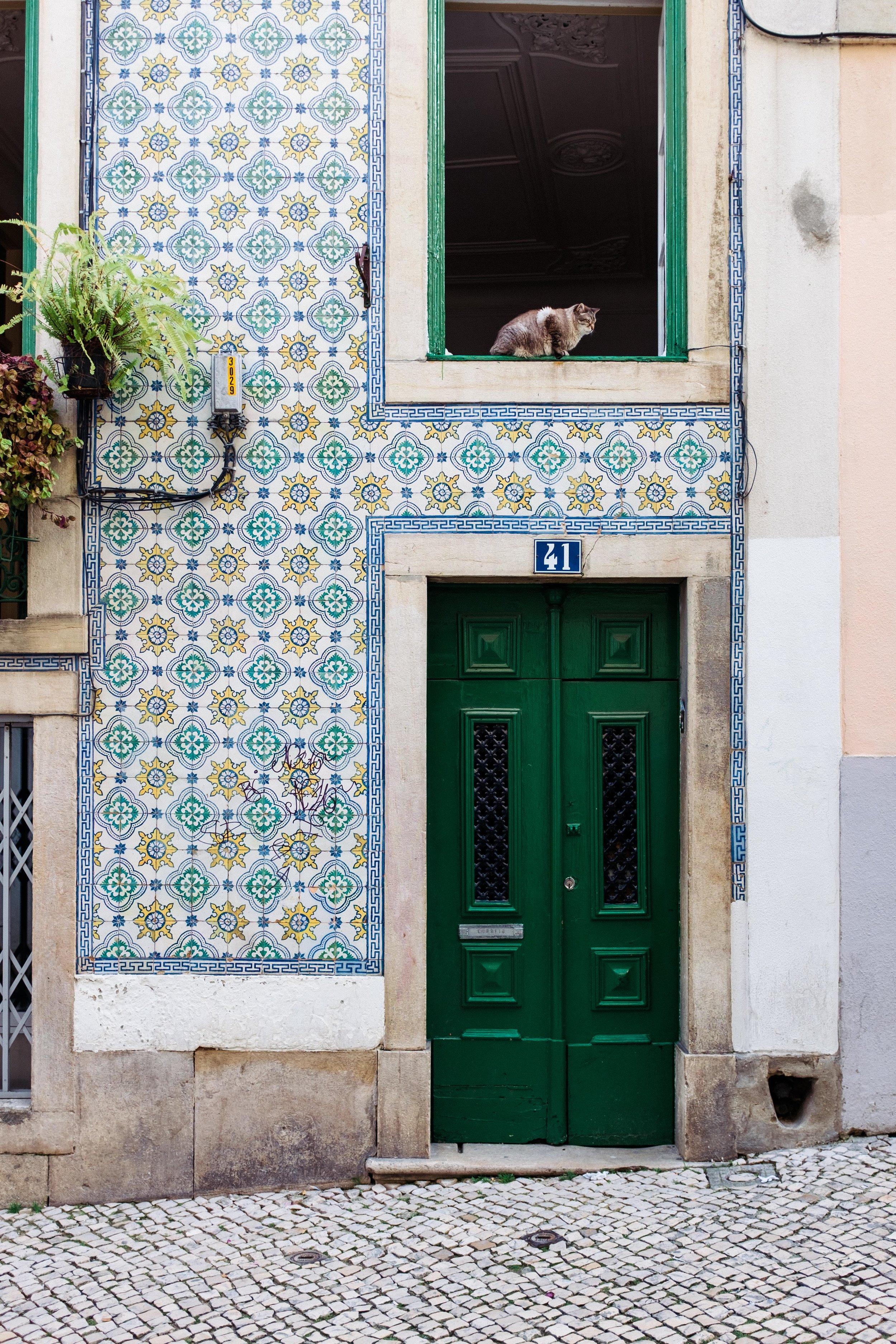 lisbon-portugal-cat-in-window