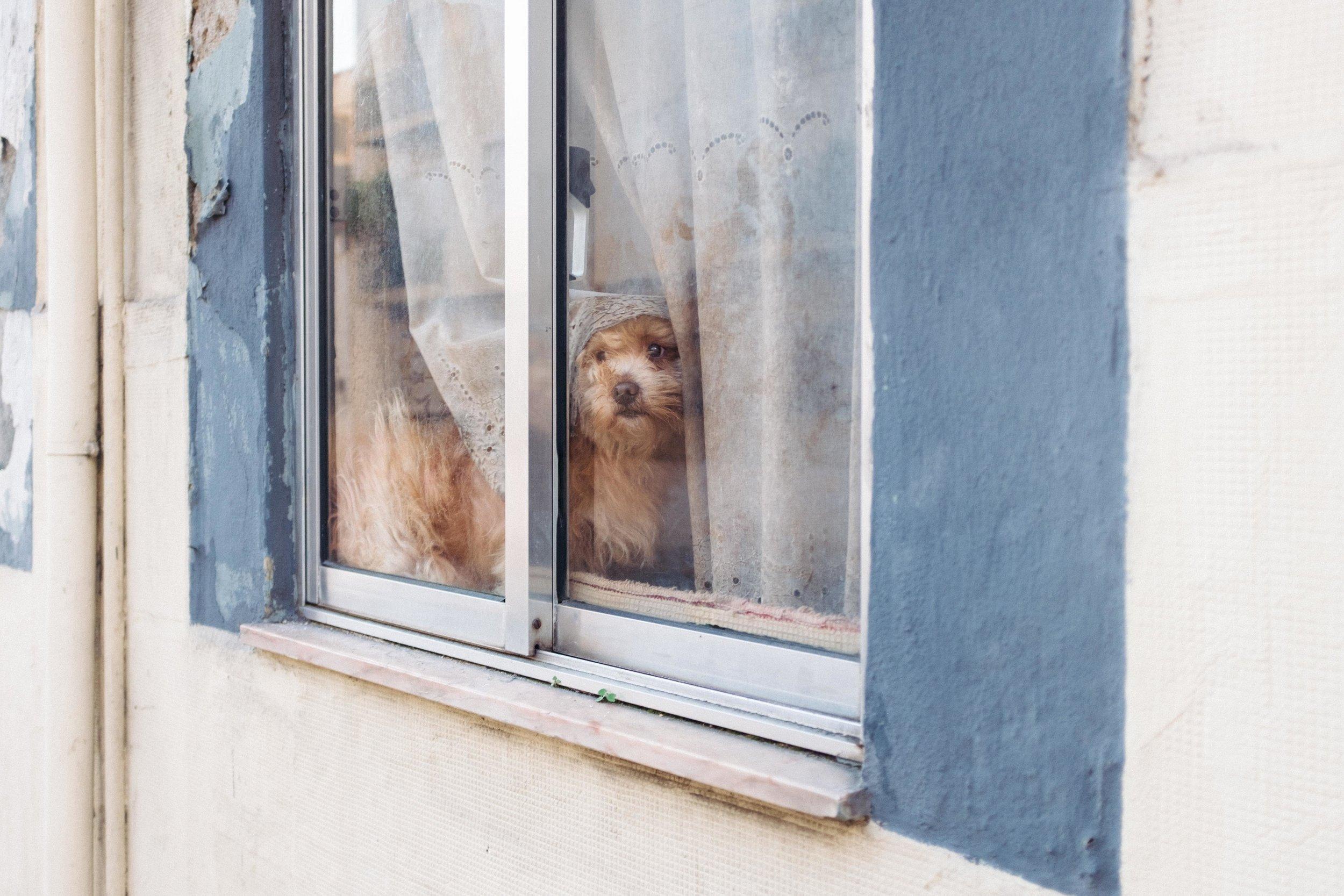 lisbon-portugal-dog-in-window