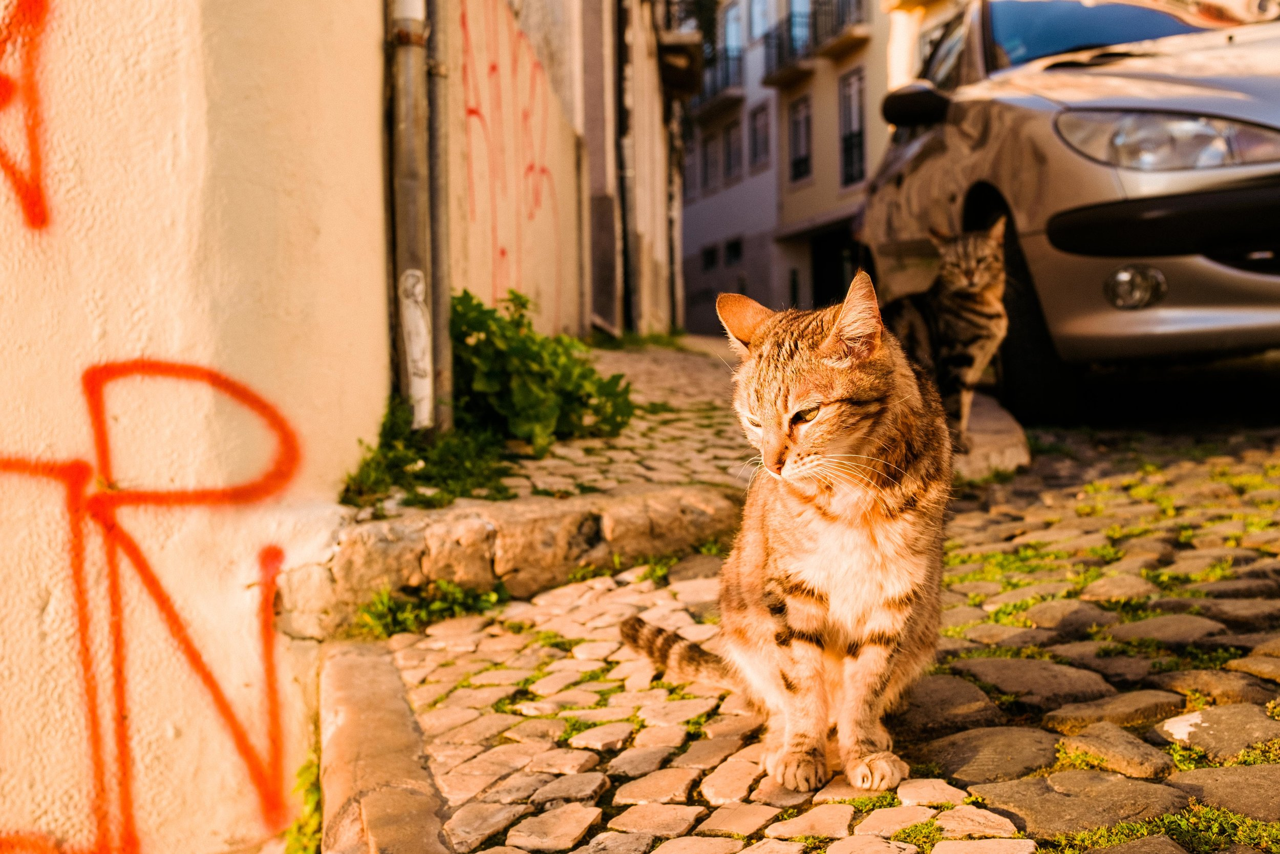 lisbon-portugal-cats-top-of-stairs