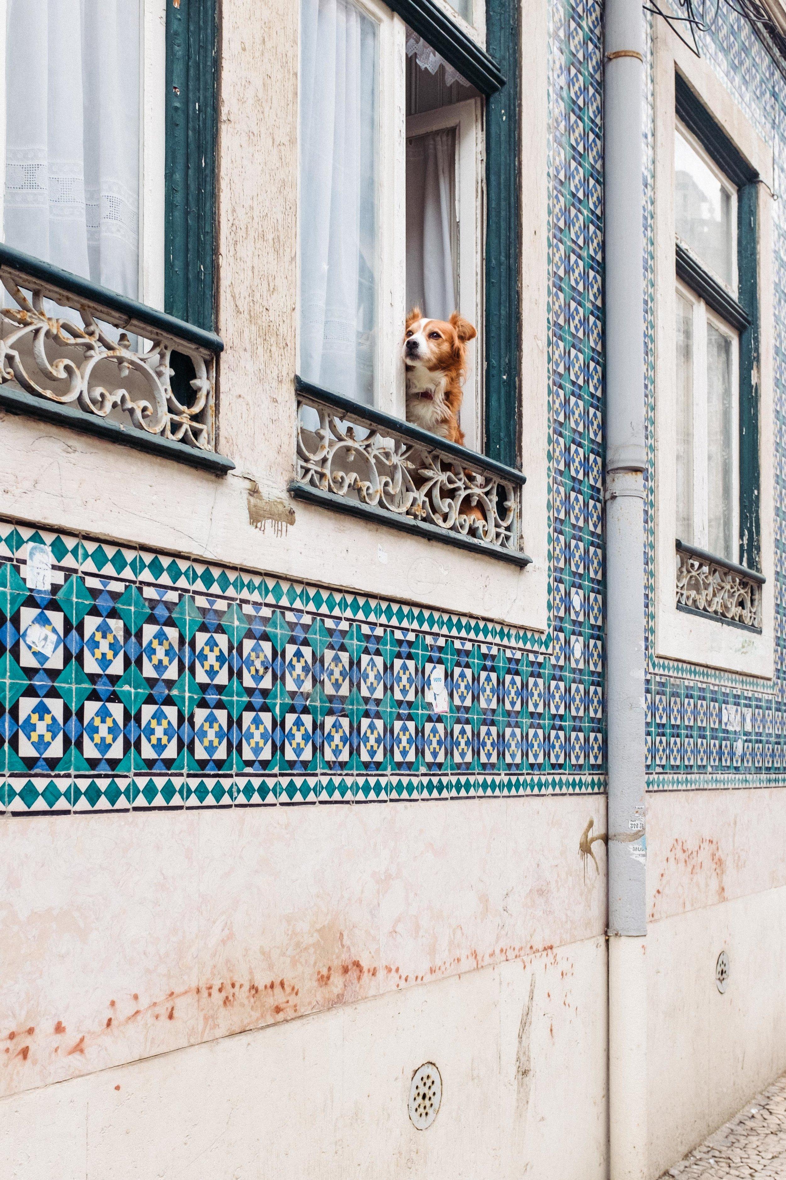 lisbon-portugal-azulejos-dog-in-window