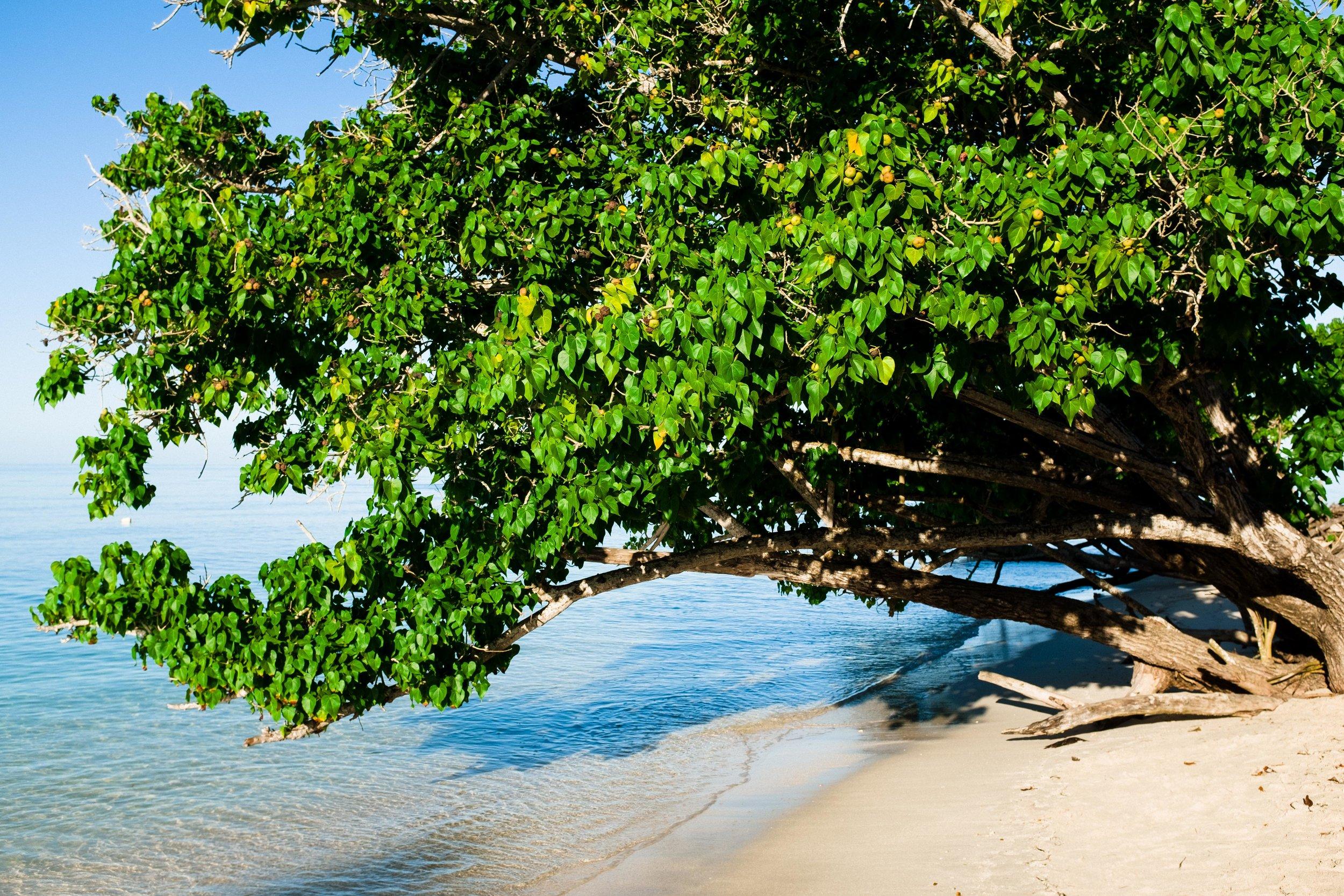 puerto-rico-cabo-rojo-playa-buye-beach-6678.jpg