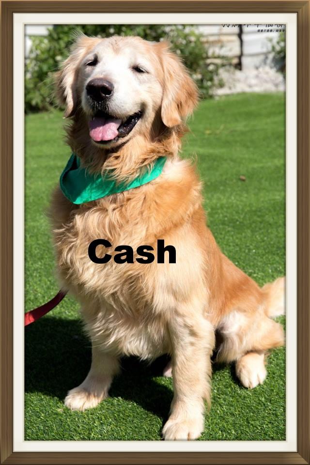 Cash002.jpg