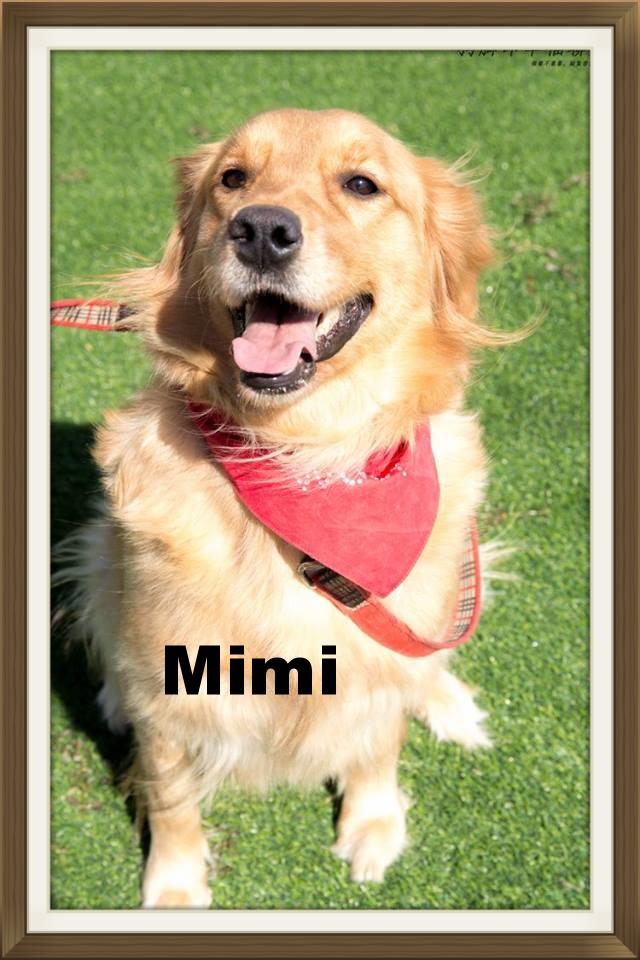 Mimi002.jpg