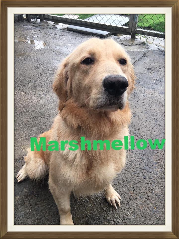 Marshmallow001.jpg