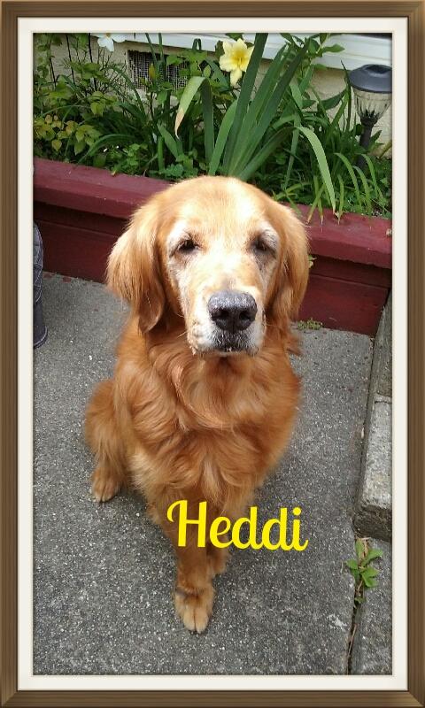Heddi-1.jpg