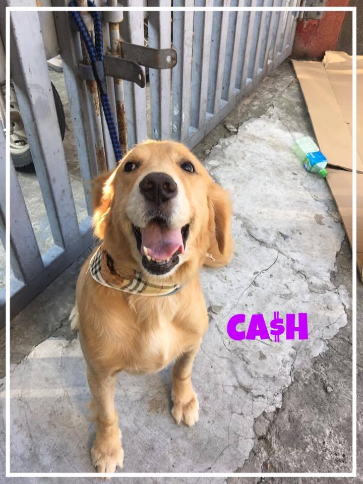 Cash-1.jpg