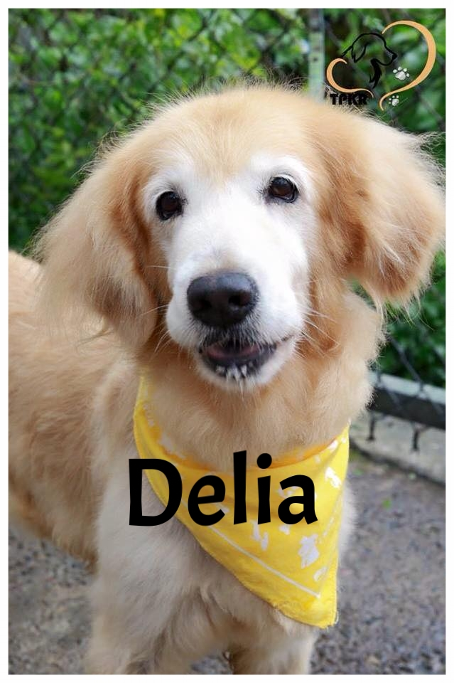 Delia_1.jpg