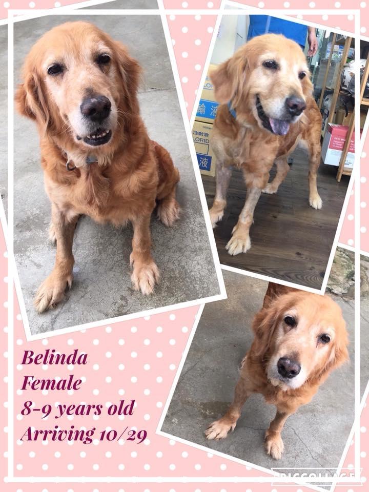 Belinda.jpg