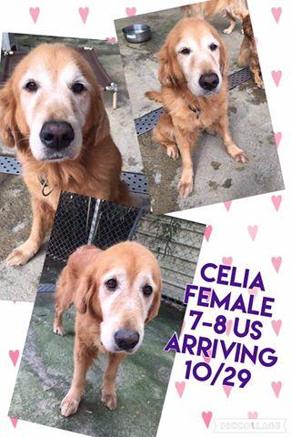 Celia.jpg