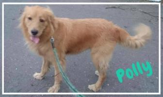 Polly 11.19.jpg