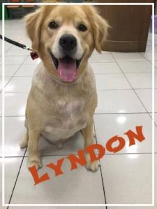 Lyndon001.jpg