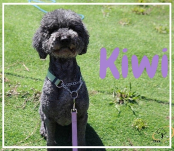 Kiwi002.jpg
