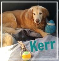 Kerr-Blue.jpg