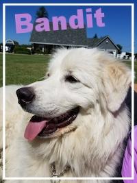 Bandit-1.jpg