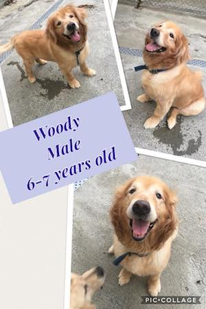 woody-1.jpg