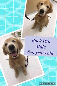 rock_pan.jpg