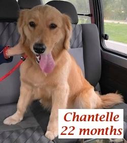 Chantelle.jpg