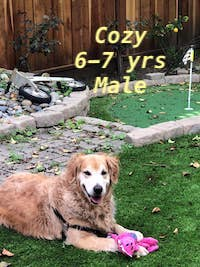Cozy-1.jpg