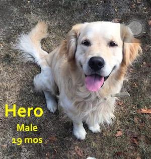 hero.JPEG