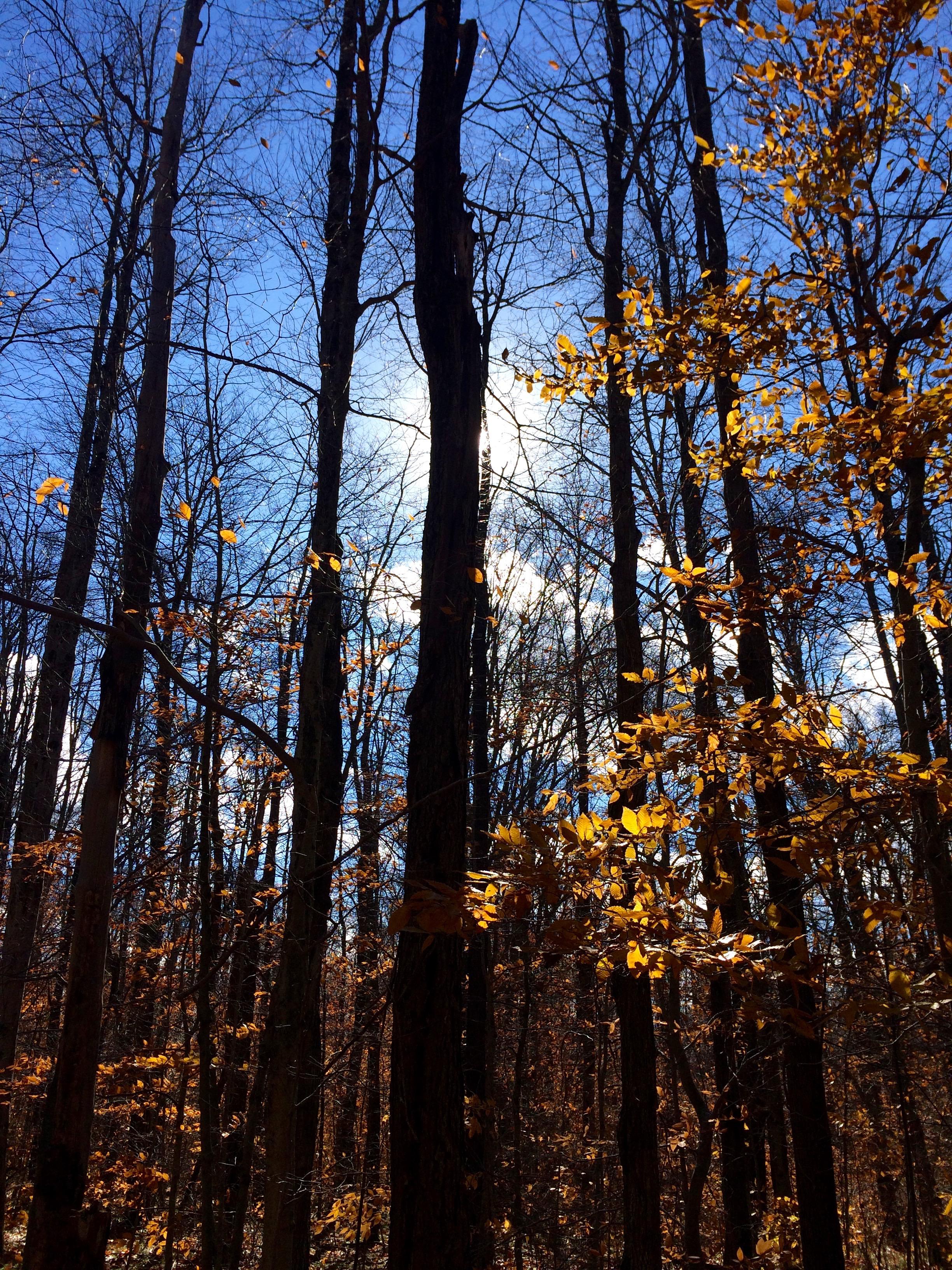 Sky woods.jpg