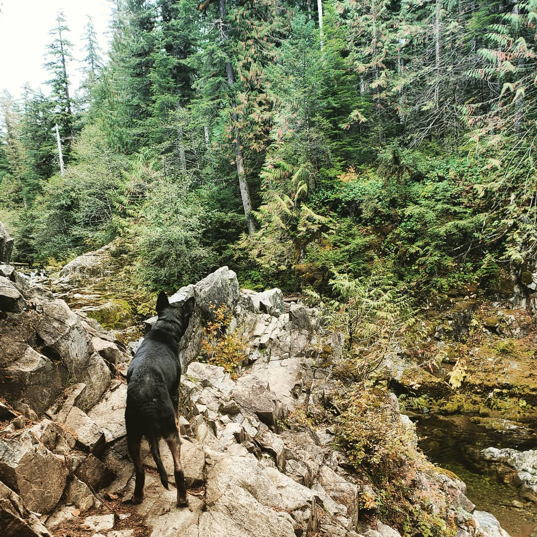 The adventures of the Adventure Dog Java would be worthy of a blog all her own!