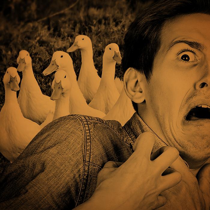 BizarrePhobias&Manias0106ANATIDAEPHOBICphotomontage.png