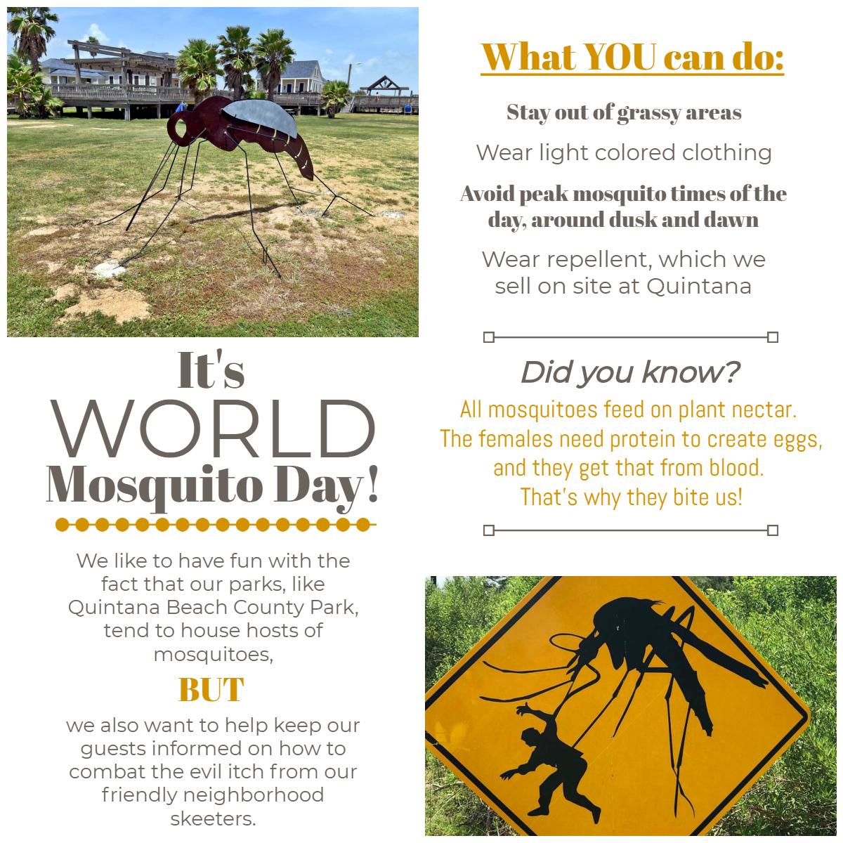 Mosquito Day.jpg