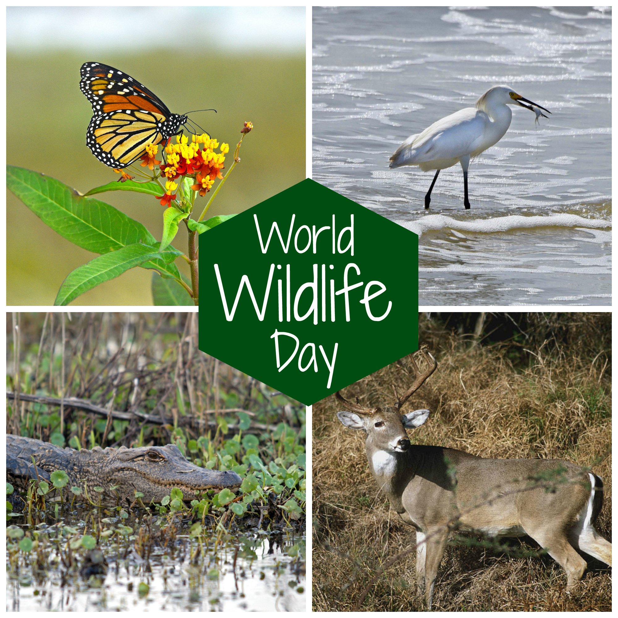 World Wildlife Day.jpg