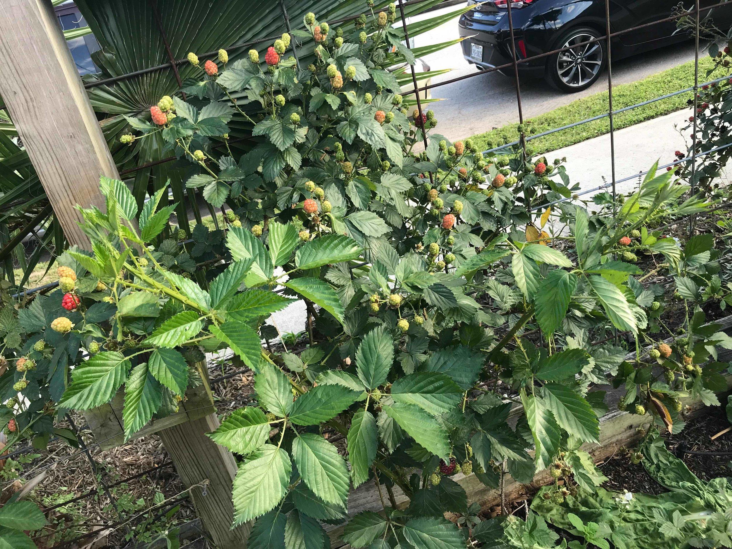 coltivaregarden1