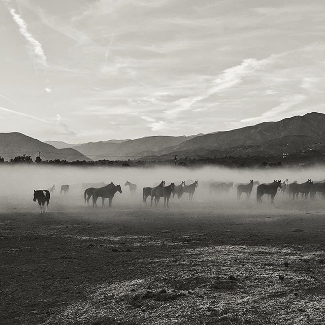 Horses in the mist. Sometimes I'm really bummed that when I don't bring my bigger camera, but I'm glad my cell phone also takes really nice photos. This is a herd of horses from a local private school in Ojai. They live on a ranch and run in a herd when the school is on break. We ran into the herd as we were leaving, and I couldn't resist taking a few pictures!