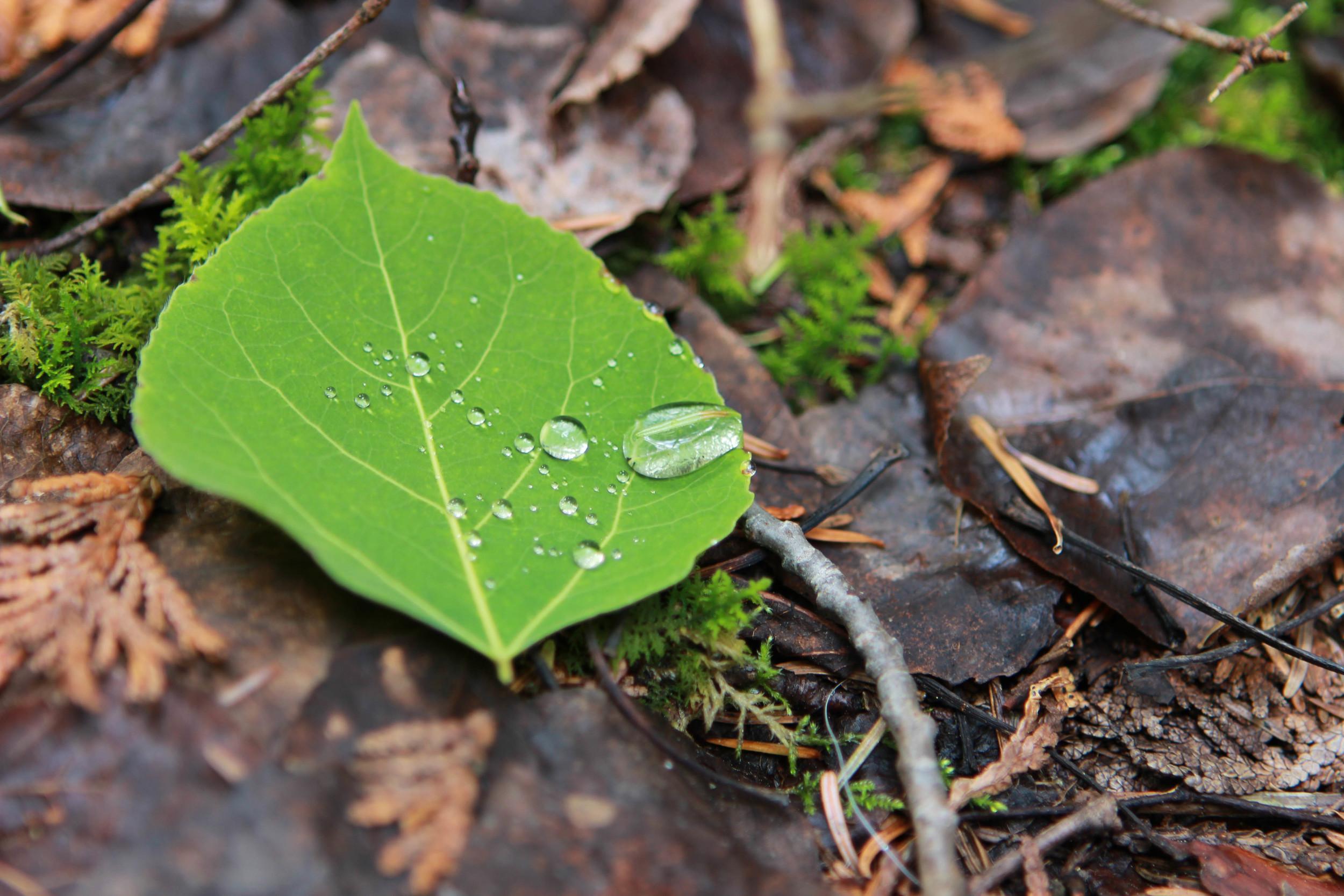 Leaf Rain Droplets - Jess Rudolph Photography: www.jessrudolph.com
