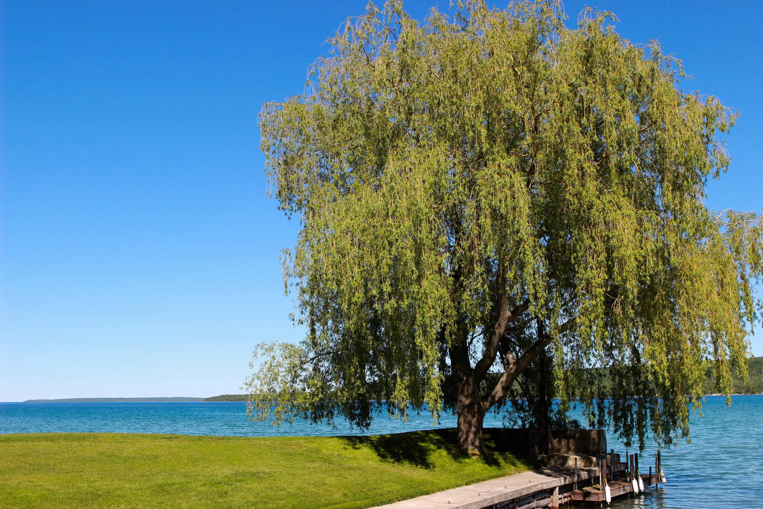 Tree | Hope Bay | Owen Sound, Canada - Jess Rudolph Photography: www.jessrudolph.com