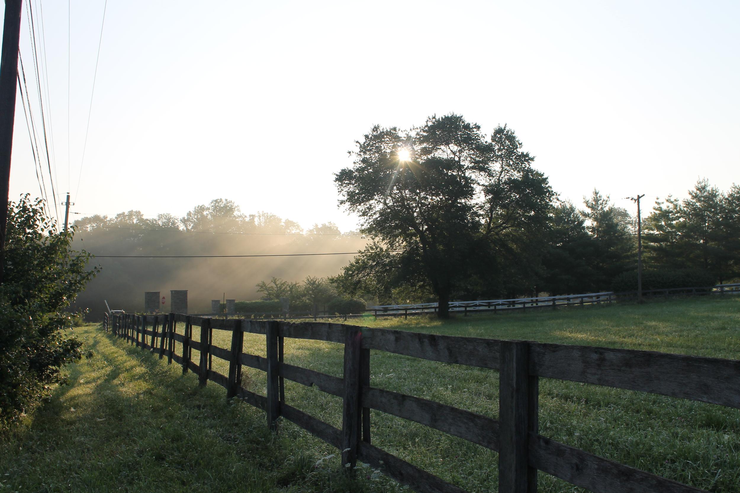Farm Rays - Jess Rudolph Photography: www.jessrudolph.com