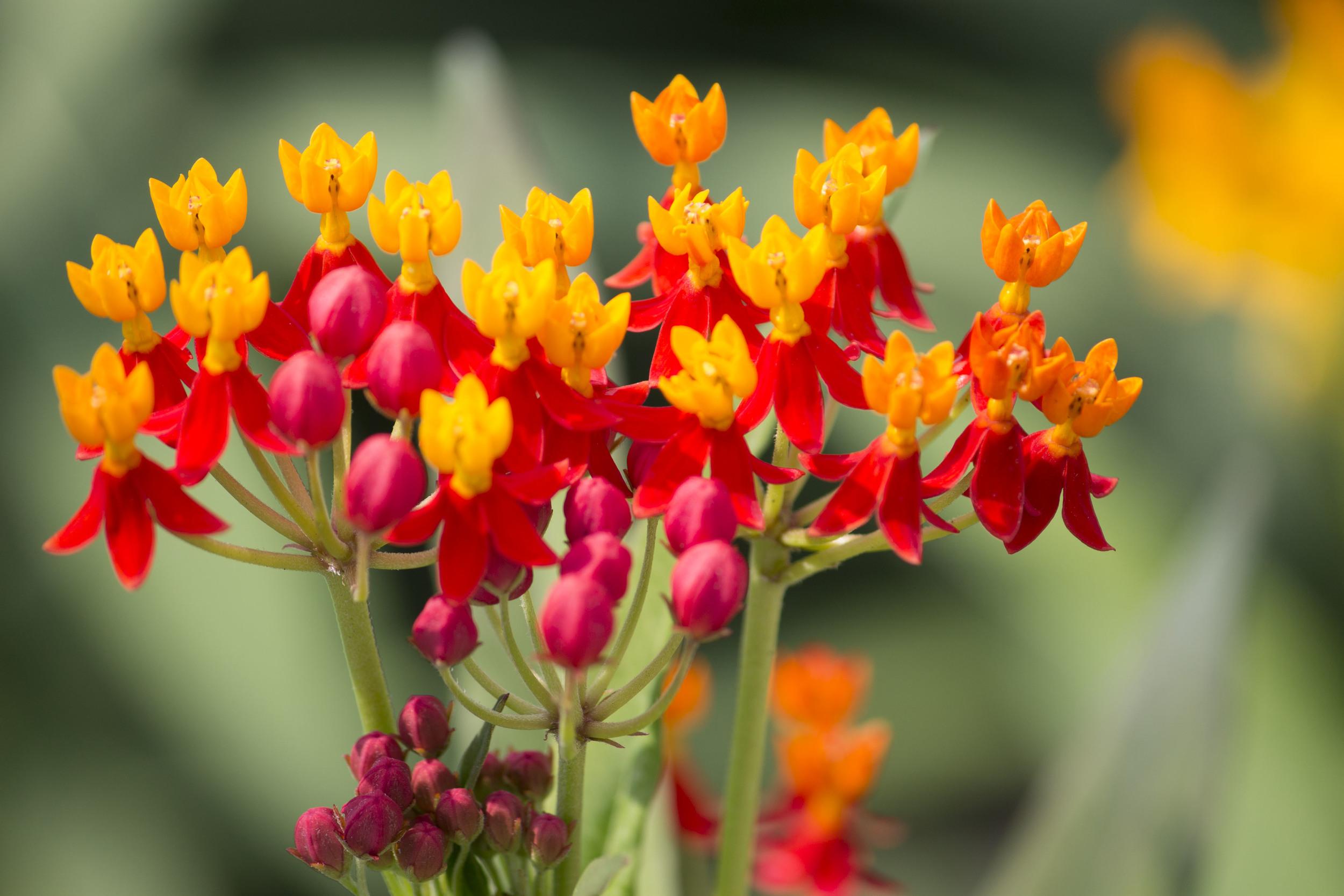 Flowers - Jess Rudolph Photography: www.jessrudolph.com