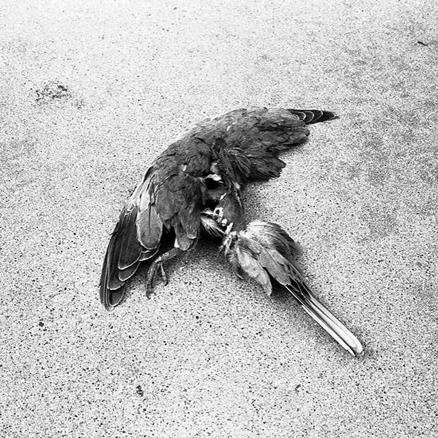 Flightless Birds | Minolta CLE / Kodak Tri X 400 (Pushed to 1600) #photographersoninstagram #minoltacle  #kodak #trix400 #shootfilm #35mm #filmphotographic #madewithkodak
