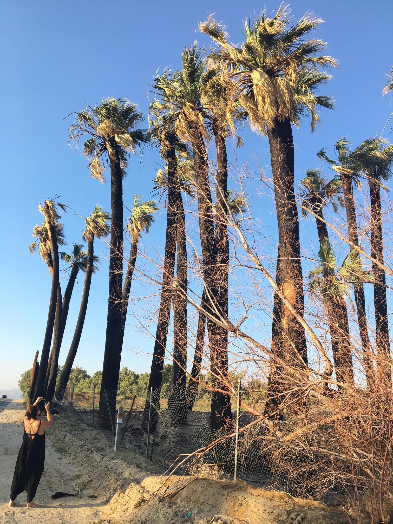 Outside of Joshua Tree, California, 2018.
