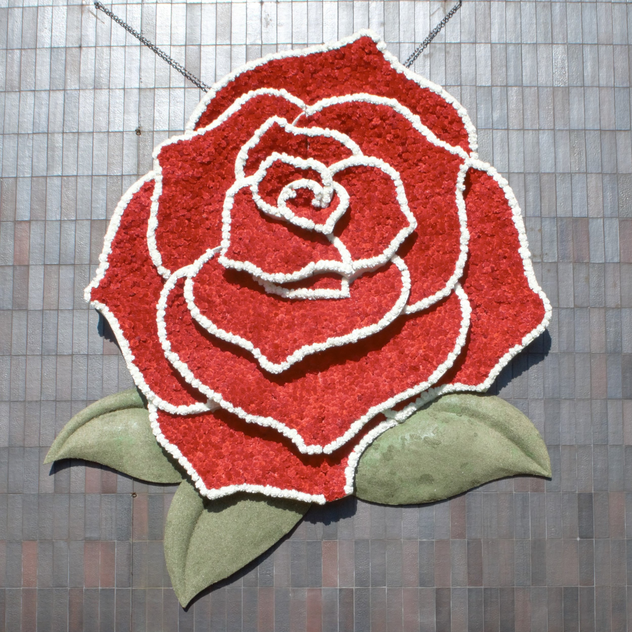 Rose hanging outside of the Norton Simon Museum