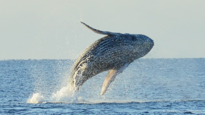 Whale Watching Hawaii Tour
