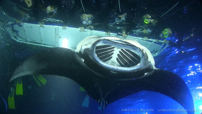 Best Manta Ray Night Snorkel Tour