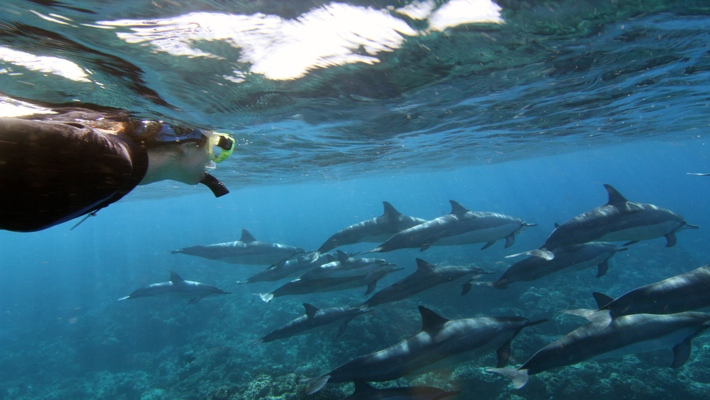Dolphin swim Kona snorkel adventure Big Island-Hawaii.jpg