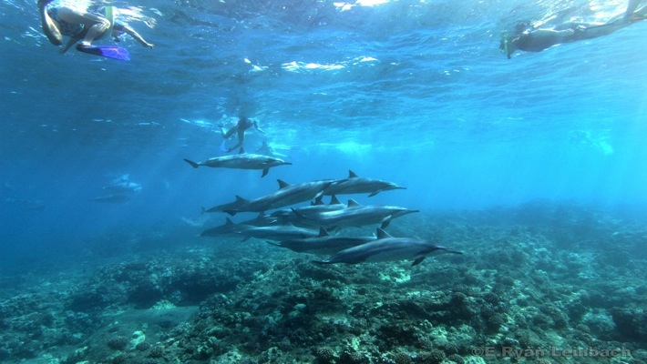 Snorkeling with Dolphins in Hawaii - Dolphin Swim and Snorkel Tour