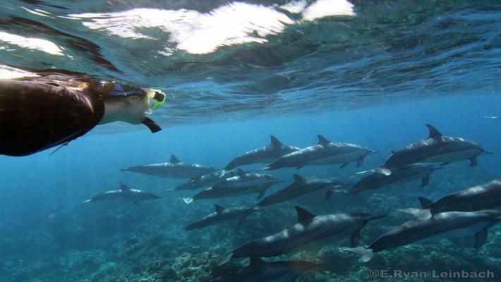 Dolphin encounters on the Dolphin Swim, Hawaii