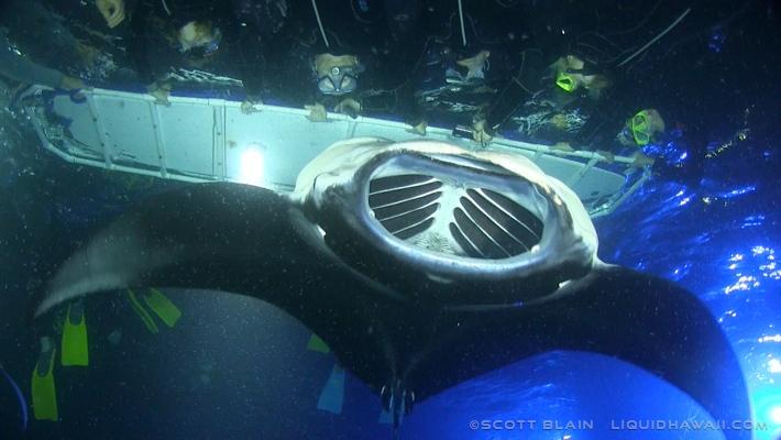 Manta Ray feeding on plankton below snorkelers on the Manta Ray Snorkel Tour