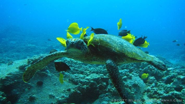 Epic Ocean Adventures--Turtle and Coral Reef Fish