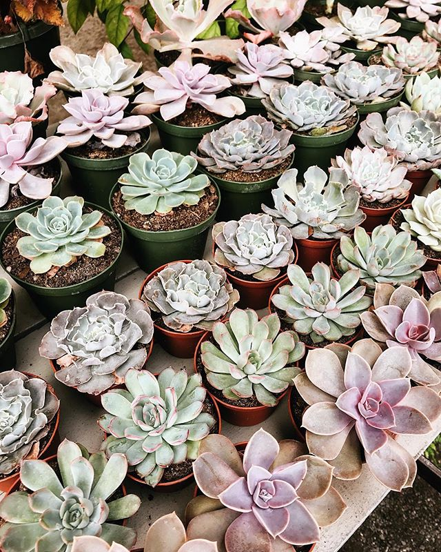 Look at all those succulent shades 😍 We're all stocked up @eastendmkt — come get your plant fix! #ombre #succulentsofinstagram #succulover